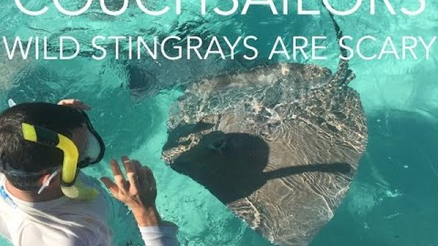 Wild Stingrays Are SCARY! || COUCHSAILORS Sailing Journal #11